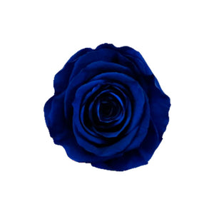 3 ROYAL BLUE ROSES