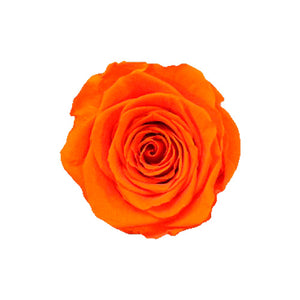 6 SUNSET ORANGE ROSES