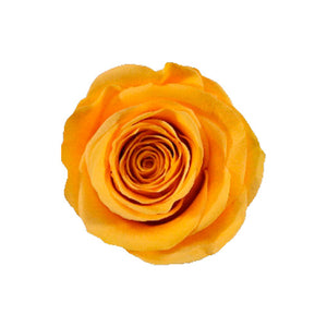 SUNSET YELLOW ROSE