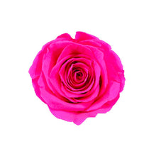 Load image into Gallery viewer, FUCHSIA ROSE