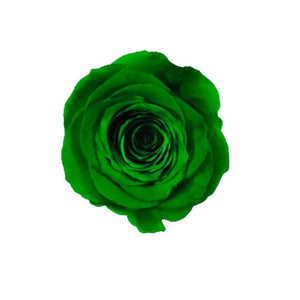 NATURE GREEN ROSE