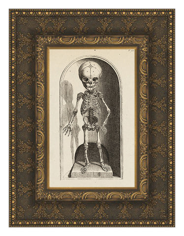 Infant Skeleton