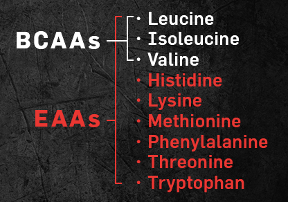 Amino Acids. What are they? What do they do? BCAA vs EAA?
