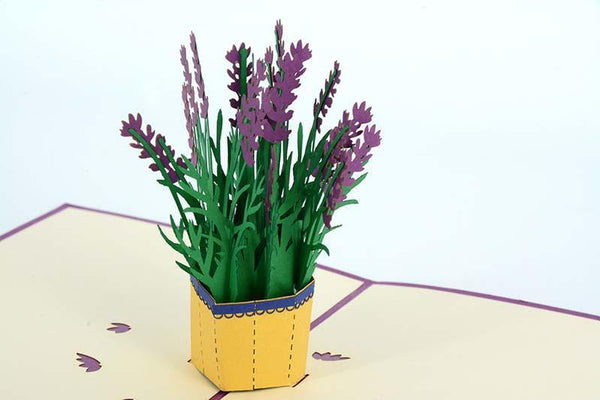 Lavender -Purple - Henry Pop-Up Cards