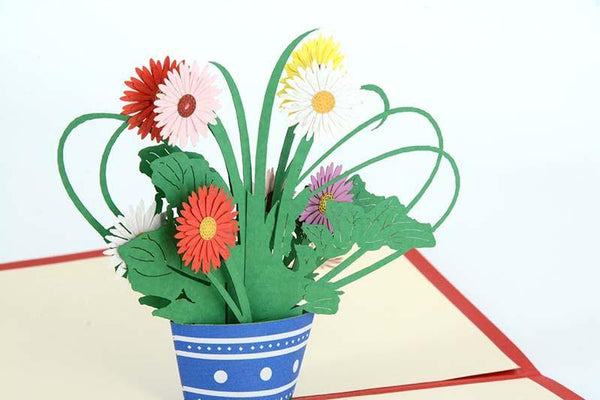 Transvaal daisy - Henry Pop-Up Cards
