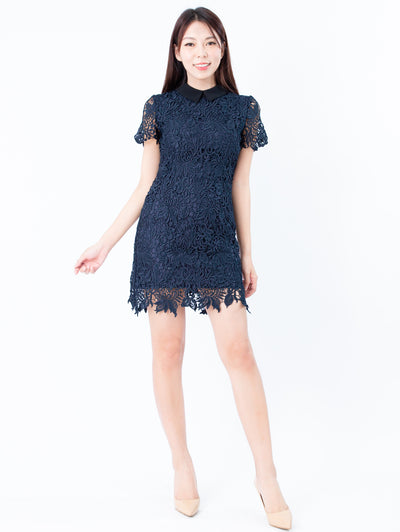 Gaily black collar navy lace dress
