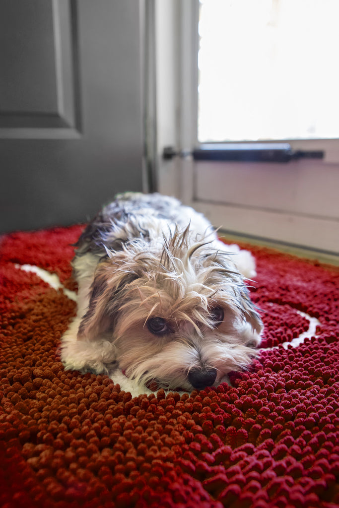 Large Cranberry Absorbent Doormat Shop Now Soggy Doggy