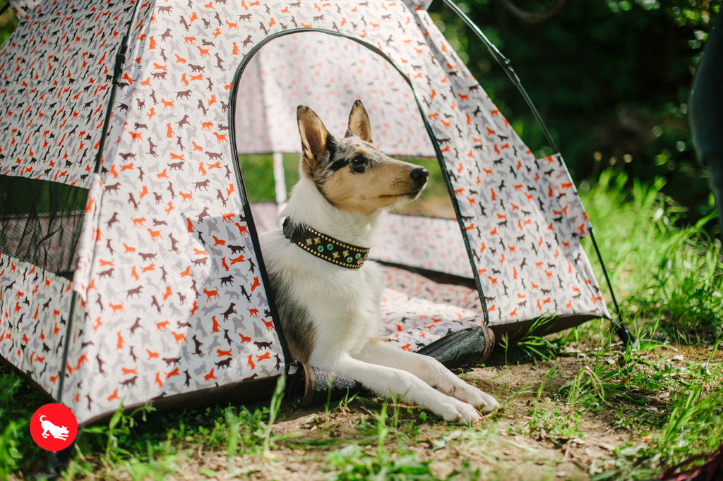 Outdoor Dog Tents