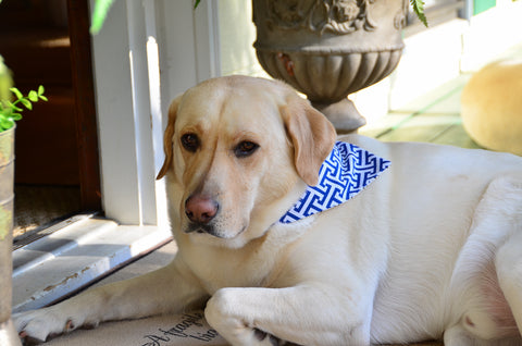 Blue Geometric Dog Bandanna