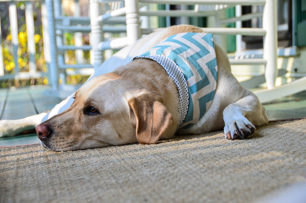 Aqua Chevron Dog Bandanna
