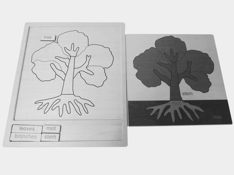 Botany Activity Set - Tree 326784785