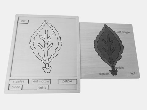 Botany Activity Set - Leaf 326794421