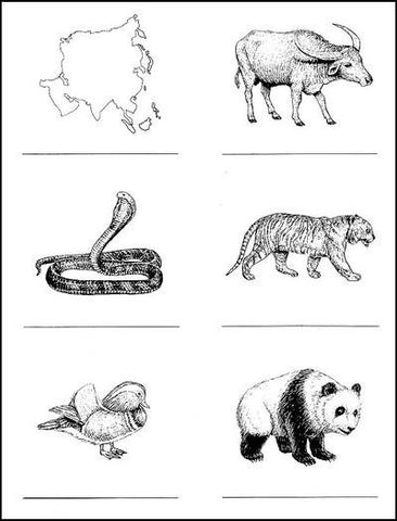 Animals of Seven Continents Replicards 129566241