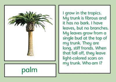 Plants Who Am I 129567691