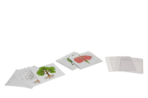 First Set Of Botany Cards 590492100