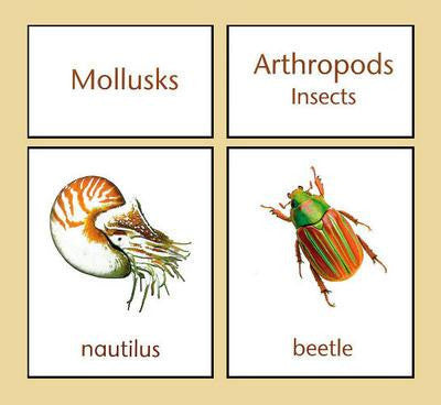 Classifications of Invertebrates 135758723