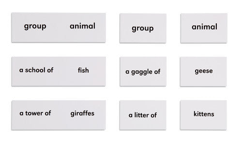 Animals And Their Groups 613986564