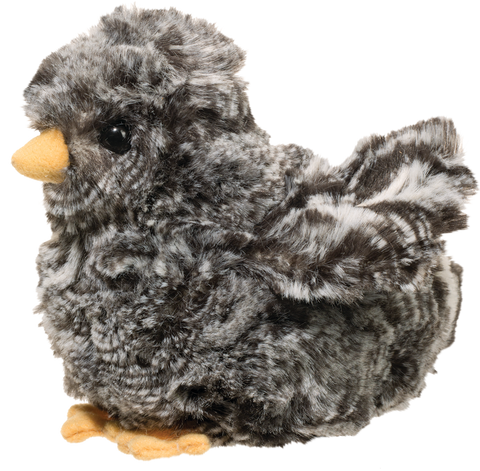 Douglas Black Multicolored Chick