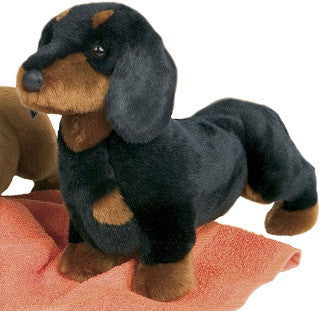 Douglas Spats Black and Tan Dachshund