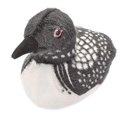 Audubon Common Loon