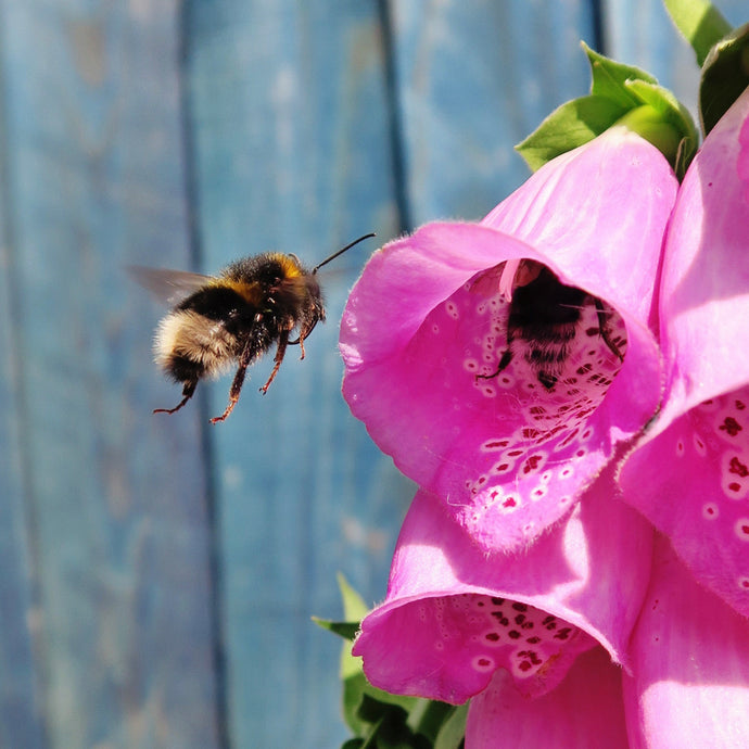 10 Ways to Help Save The Bees This Summer