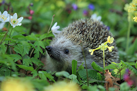invite wildlife into your garden all year round