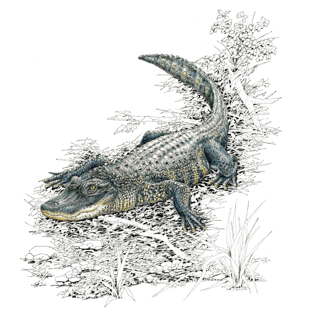 Adult Gator Limited-Edition Print