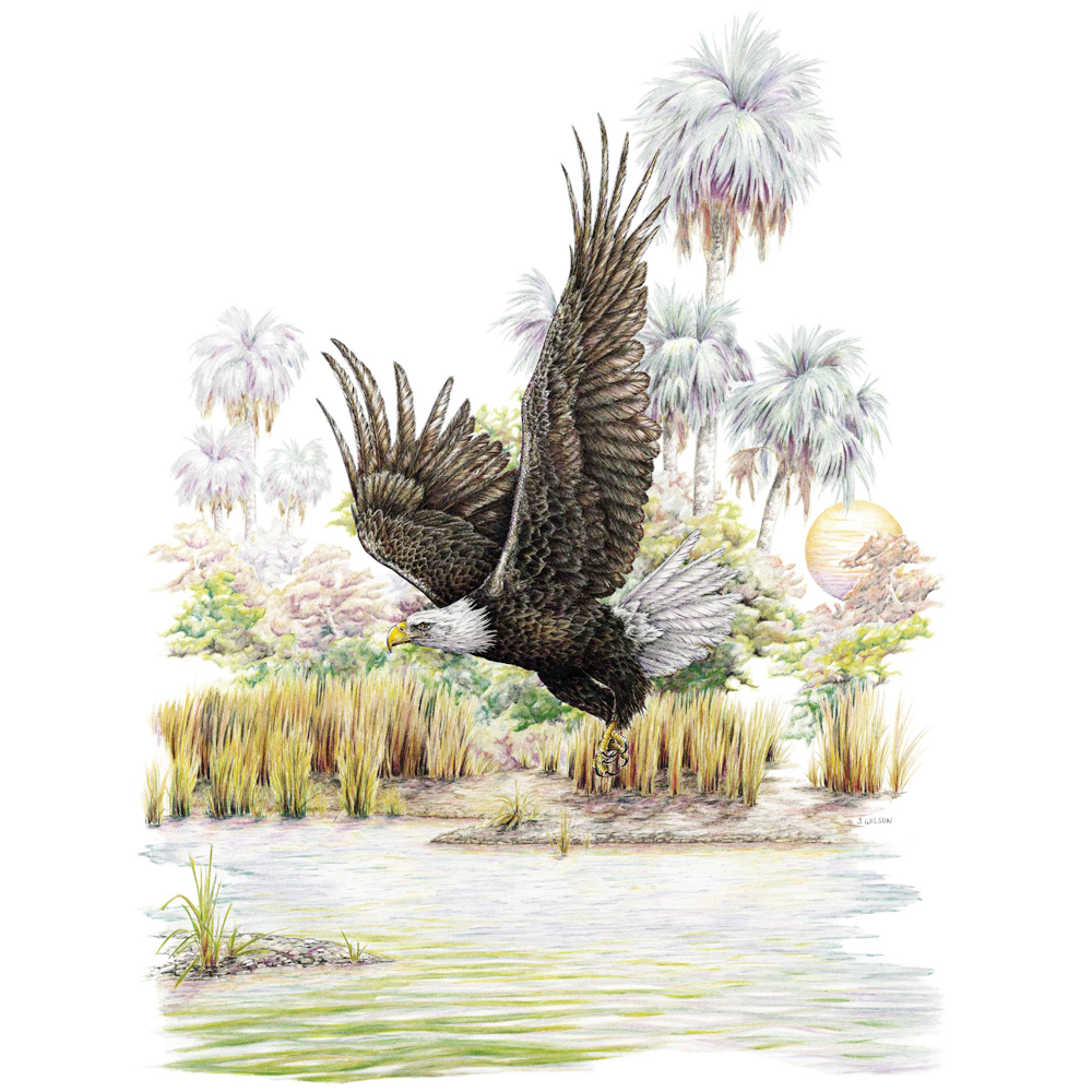 Bald Eagle Limited-Edition Print