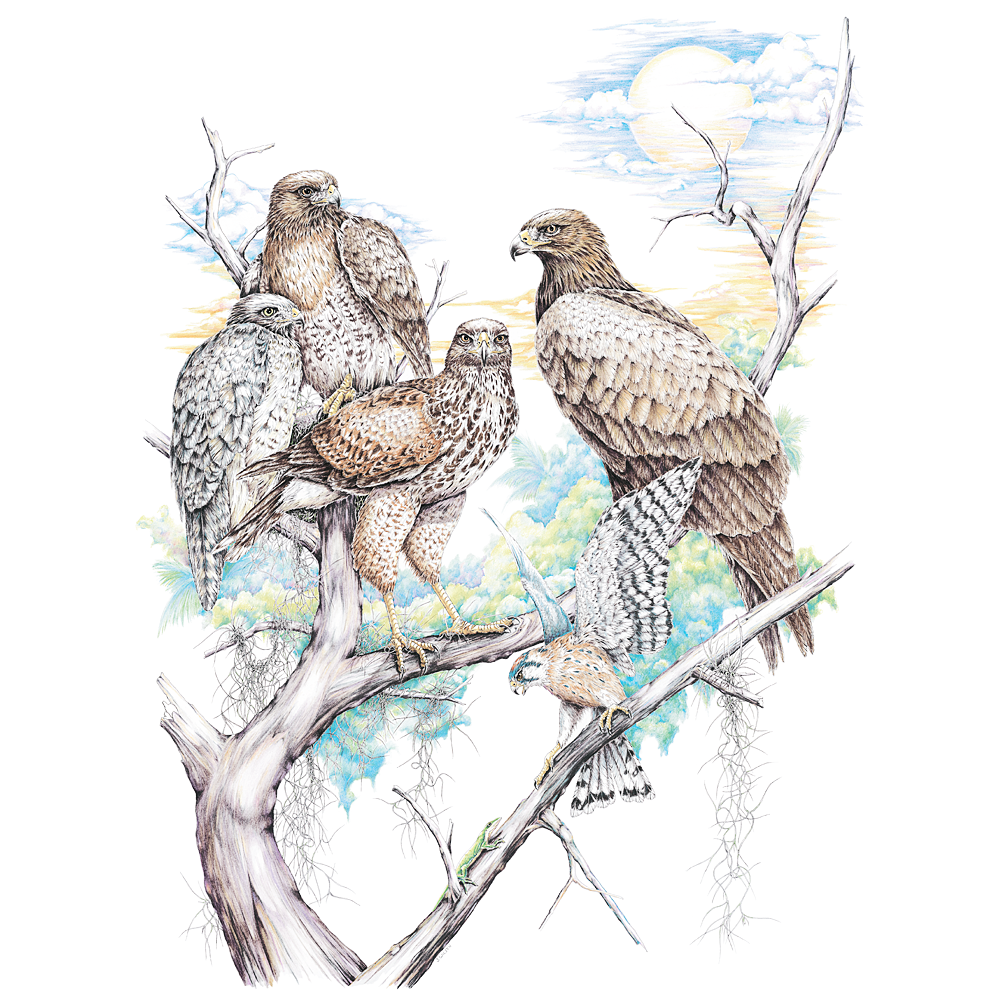 Birds of Prey, Limited-Edition Print