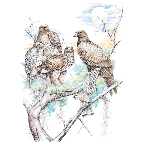 Birds of Prey Wildlife T-shirt