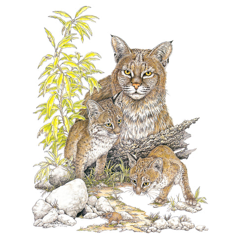 Bobcats Wildlife T-shirt