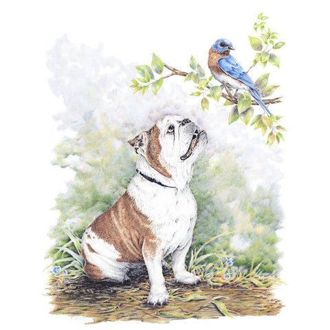 Bulldog with Bluejay- Framed Original Drawing
