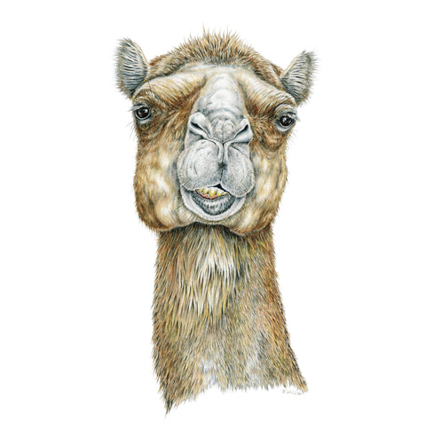 Camel Face - Framed Original Drawing