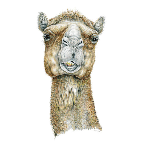 Camel Face Limited-Edition Print