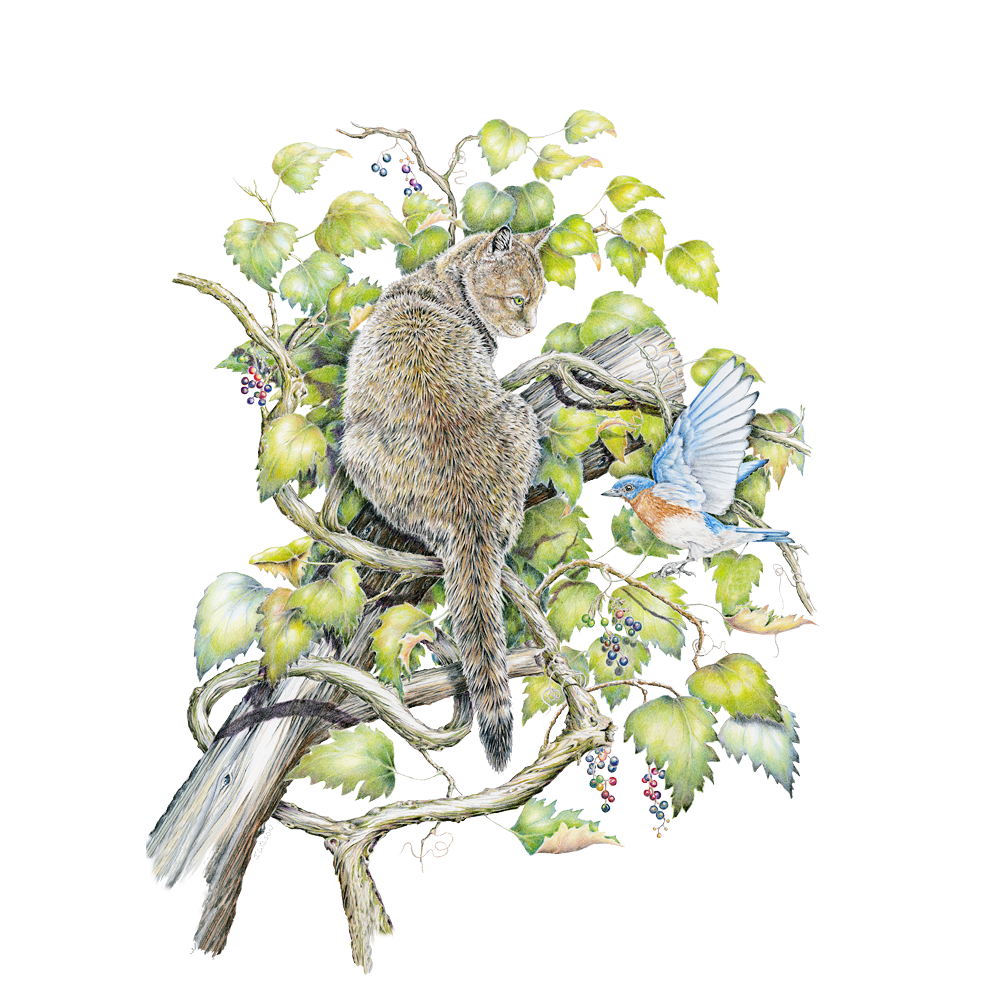 Cat and Bluebird Limited-Edition Print