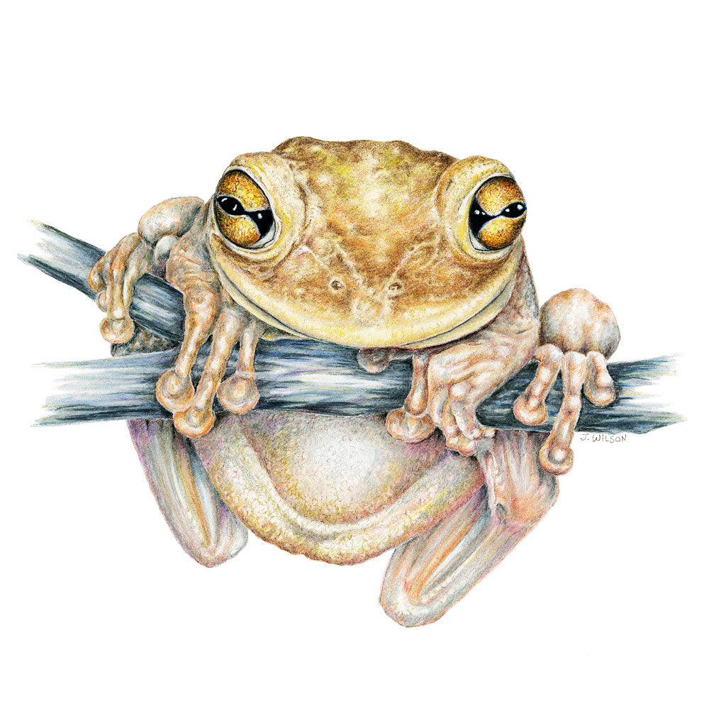 Cuban Tree Frog Limited-Edition Print