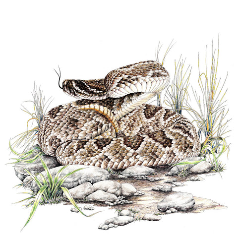 Diamondback Rattlesnake Limited-Edition Print