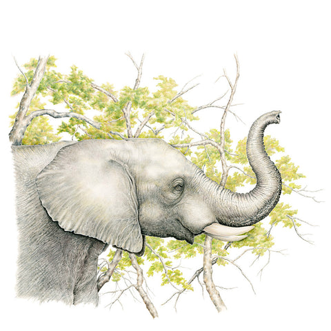 Elephant Profile - Framed Original Drawing