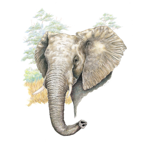 Elephant Limited-Edition Print