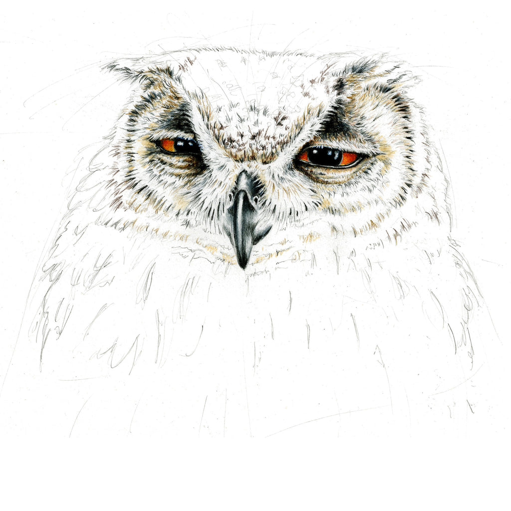Eurasian Eagle Owl Limited-Edition Print