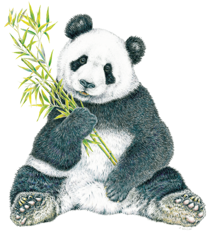 Panda Wildlife T-shirt