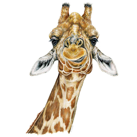 Giraffe - Framed Original Drawing