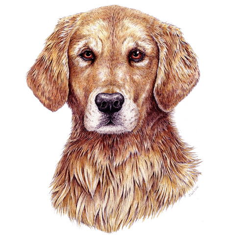 Golden Retriever Wildlife T-shirt