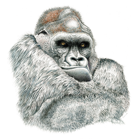 Gorilla Limited-Edition Print
