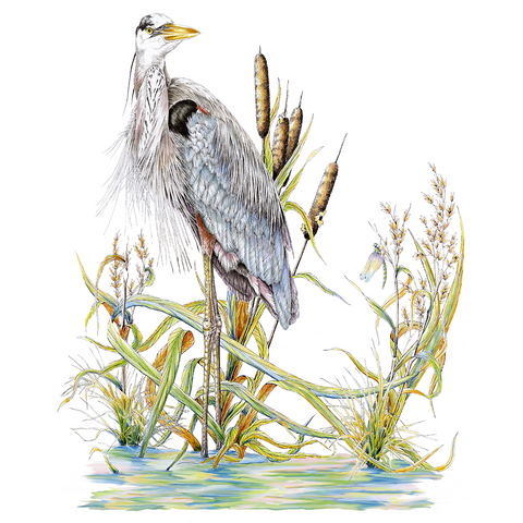 Great Blue Heron Limited-Edition Print