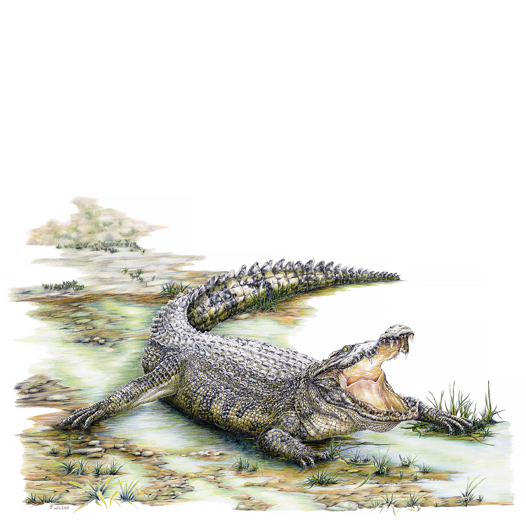 Growling Gator Limited-Edition Print