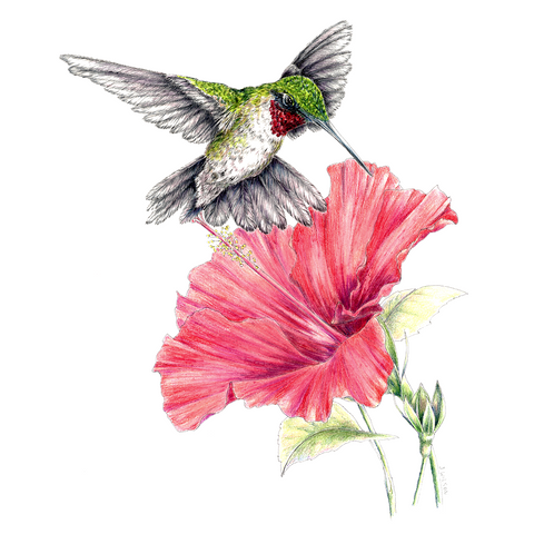 Hummingbird with Hibiscus Limited-Edition Print
