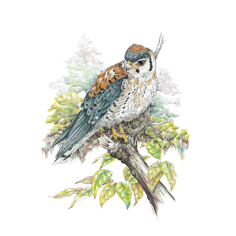 Kestrel Limited-Edition Print