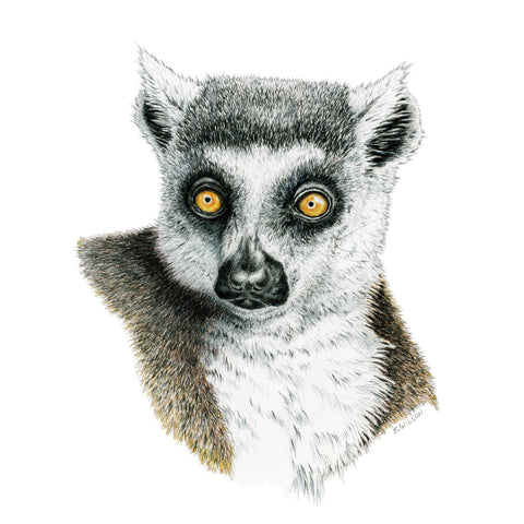 Lemur - Framed Original Drawing