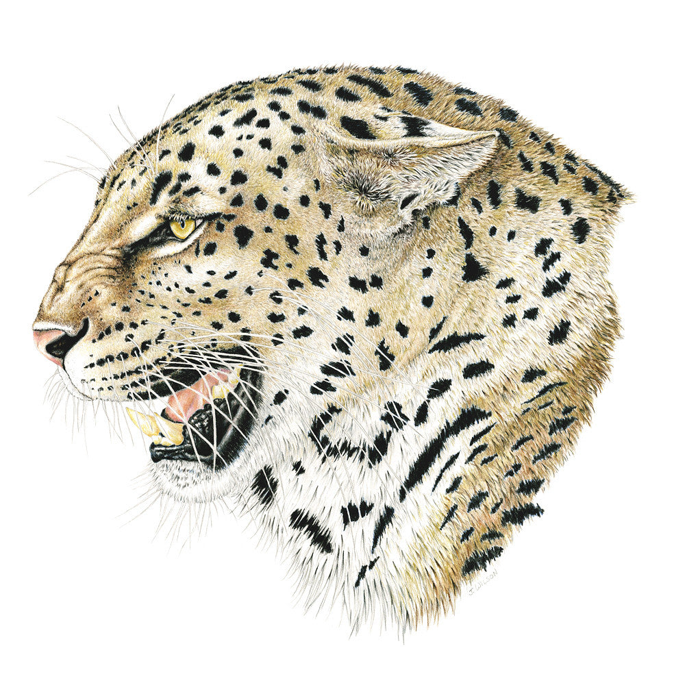 Leopard Profile Limited-Edition Print